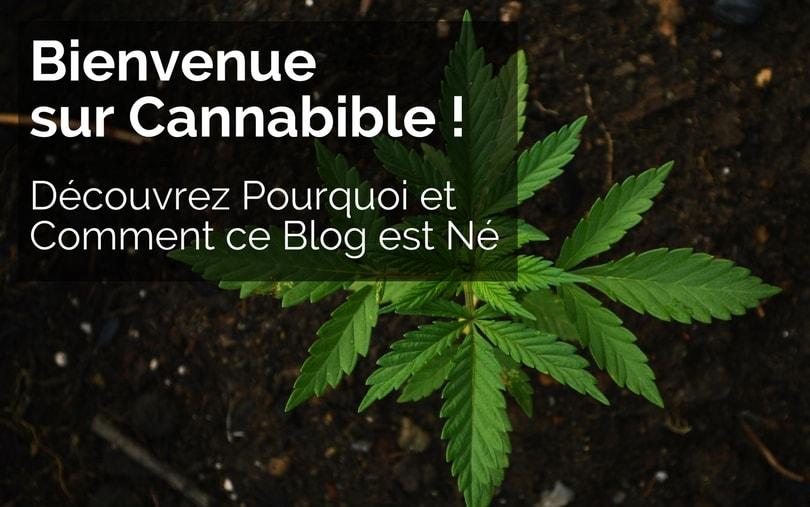 Jeune Plant de Cannabis en Exterieur