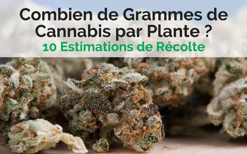 Image de couverture - Combien de Grammes de Cannabis par Plante - Estimations de récolte