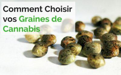Comment Choisir les Meilleures Graines de Cannabis