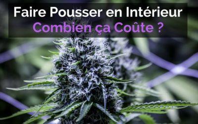 Cultiver du Cannabis en Intérieur : Combien ça Coûte Réellement ?