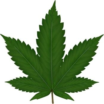 Dessin d'une Feuille de Cannabis Indica