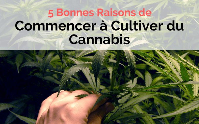 5 Bonnes Raisons de 5 Bonnes Raisons de Commencer à Cultiver du Cannabis - Image de couverture