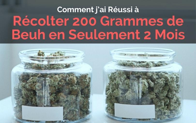 Image de Couverture de l'Article Récolter 200 Grammes de Beuh en Seulement 2 Mois