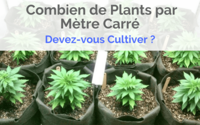Combien de Plants par Mètre Carré Devez-vous Cultiver en Intérieur ?
