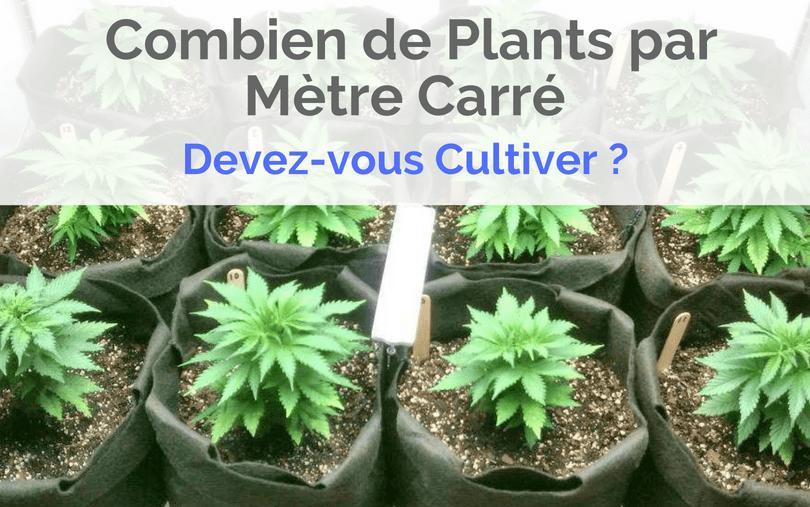 Combien de Plants par Mètre Carré Devez-vous Cultiver