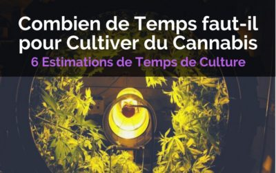 Combien de Temps Faut-il pour Faire Pousser du Cannabis ?