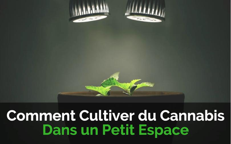 Image de couverture de l'article Comment Cultiver du Cannabis dans un Petit Espace