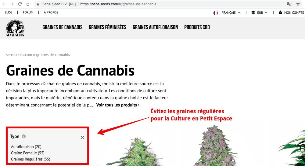 Évitez les Graines Régulières pour la Culture de Cannabis en Petit Espace