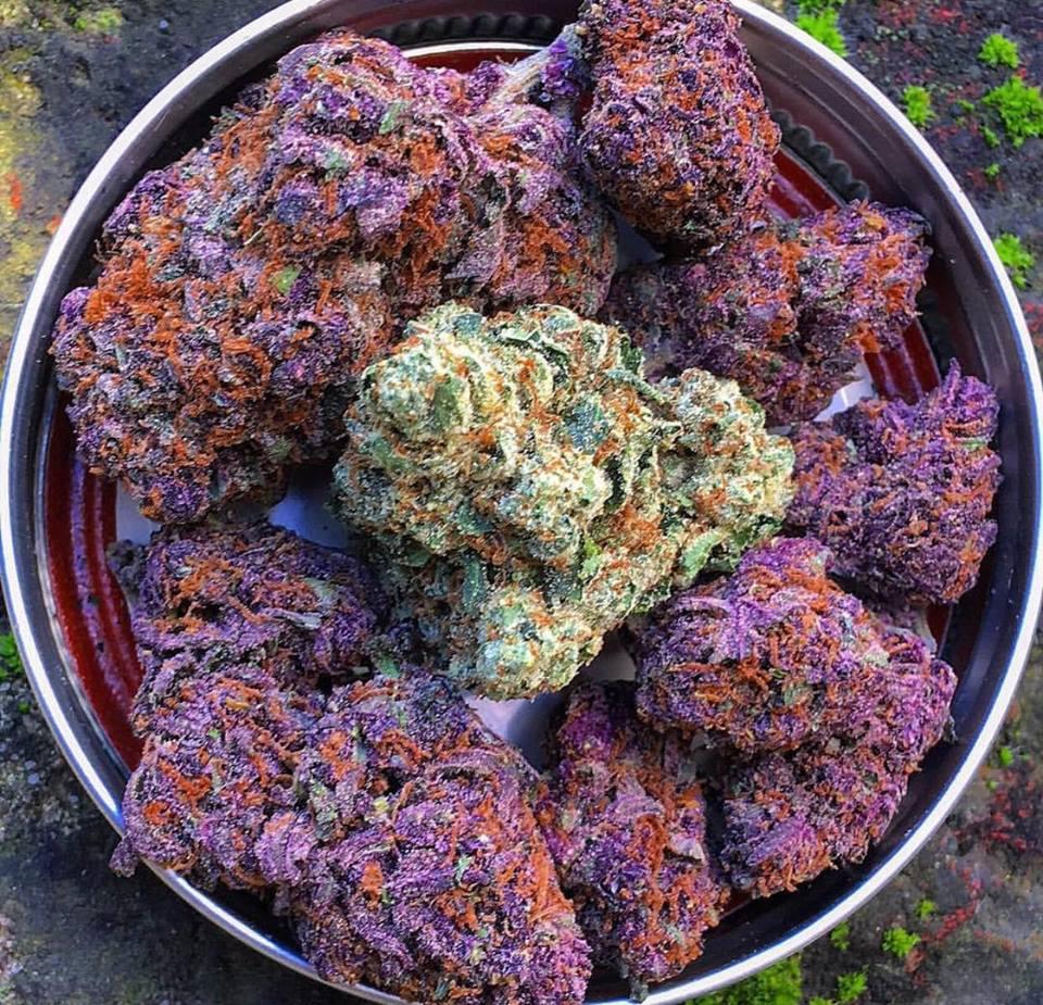 Herbe Violette de Culture de Cannabis en Intérieur