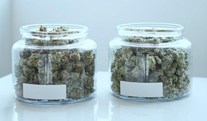 Bocaux de Weed Indoor