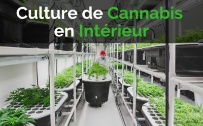 Culture de Cannabis en Intérieur : Le Guide Ultime