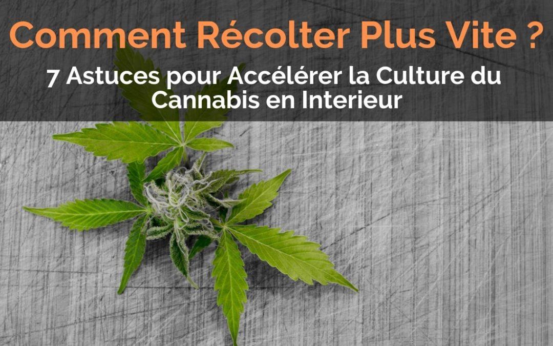 Récolter Plus Vite - Accélérer la Culture du Cannabis en Interieur
