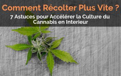 Comment Récolter Plus Vite : 7 Astuces pour Accélérer la Culture du Cannabis en Interieur