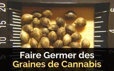 Faire Germer des Graines de Cannabis : 4 Méthodes de Germination