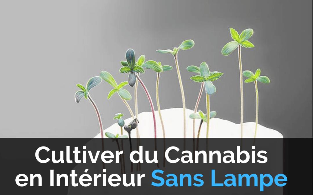 Image de couverture Cultiver du Cannabis en Intérieur Sans Lampe
