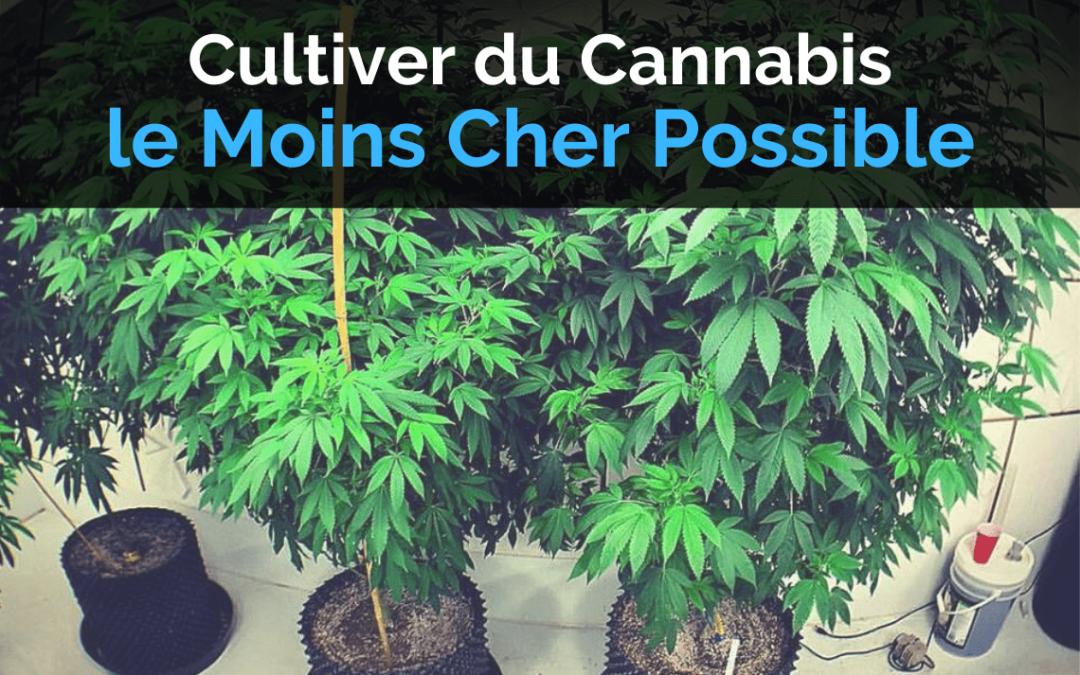 Cultiver du Cannabis Pas Cher