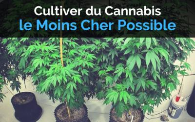 Comment Cultiver du Cannabis le Moins Cher Possible
