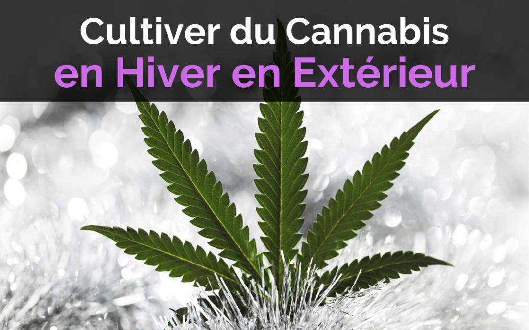 Culture de Cannabis en Hiver en Extérieur
