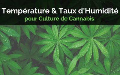 La Température et le Taux d'Humidité pour la Culture de Cannabis Indoor