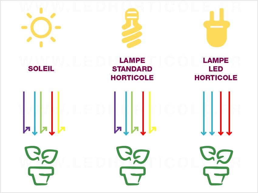 Spectre Lumineux LED vs Autres Types d'Éclairage