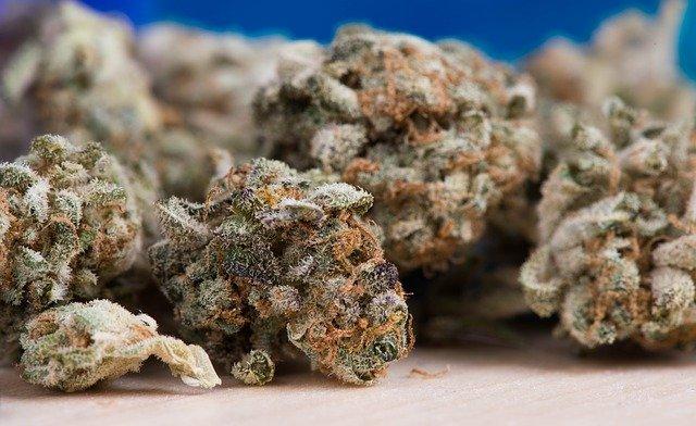 Buds de cannabis