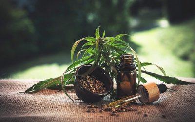 Nutriments Pour Cannabis – Le Guide Ultime