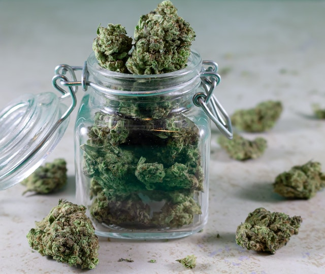 Récolte de cannabis sans engrais