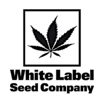 White Label Seeds Company - meilleures banques hollandaises